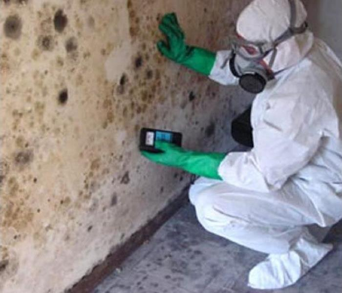 Mold Remediation Mold Detection and Remediation